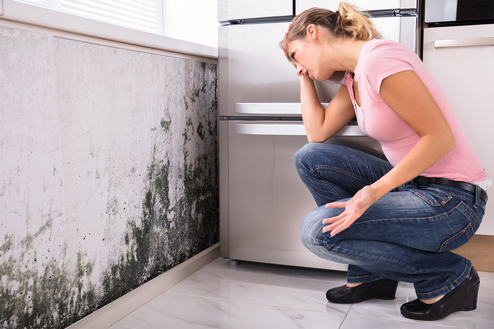 What Is Rising Damp? Everything You Need To Know