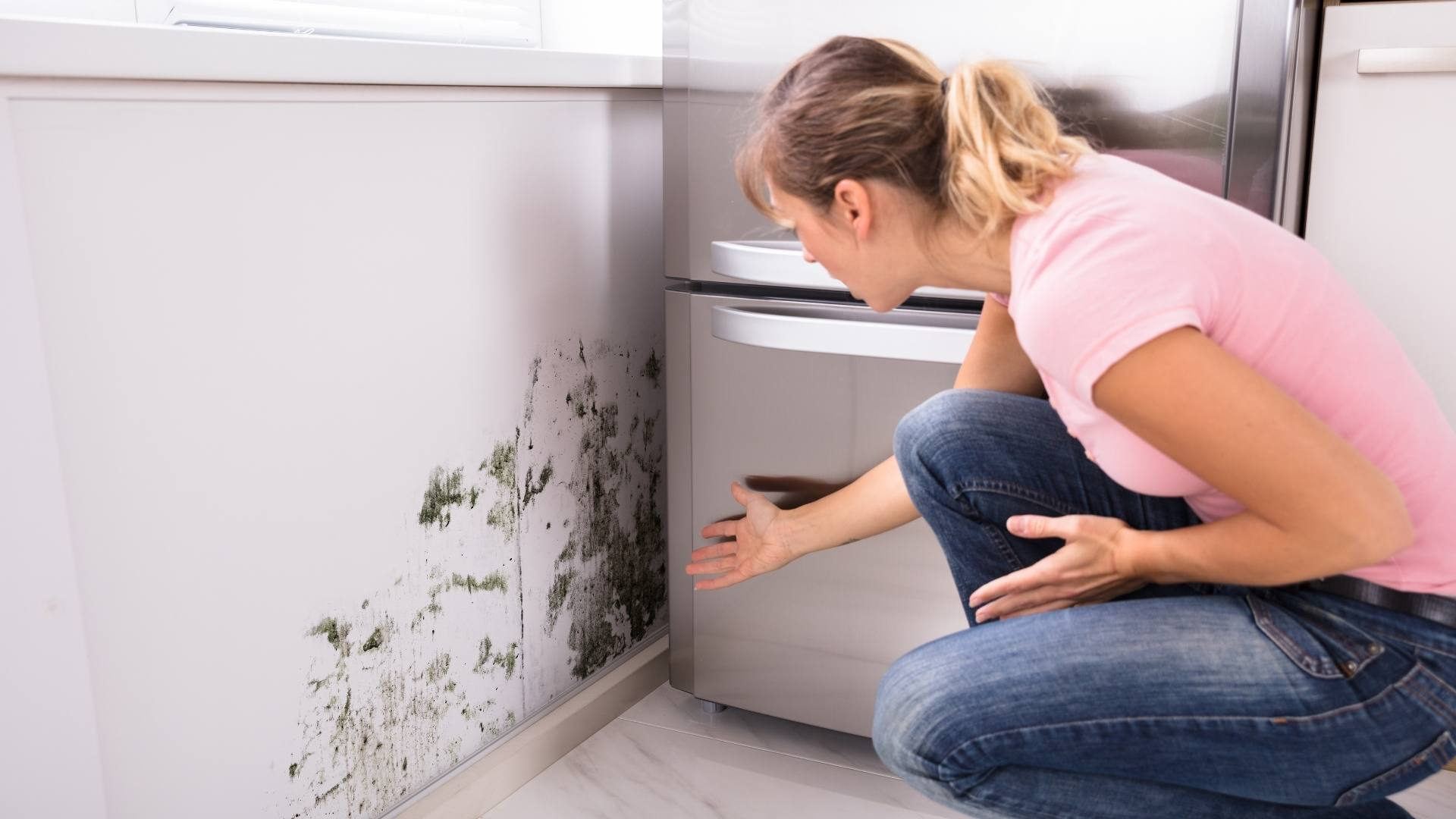 Most Common Places to Check for Mould - Most Common Places to Check for Mould in Your Home