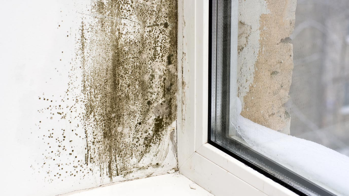 Rising Dampness and Mould? Don't Ignore the Signs